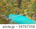 寸又峡 夢の吊り橋 紅葉の写真 39767356