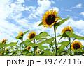 向日葵 花 夏の写真 39772116