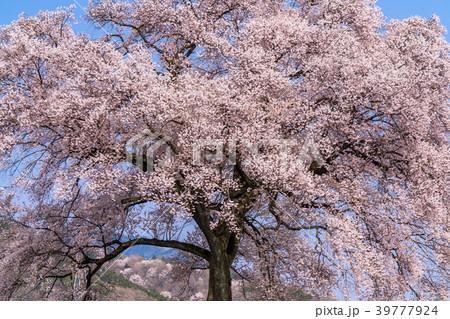 《山梨県》わに塚の桜 39777924