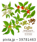 コーヒー ベクトル 実のイラスト 39781463