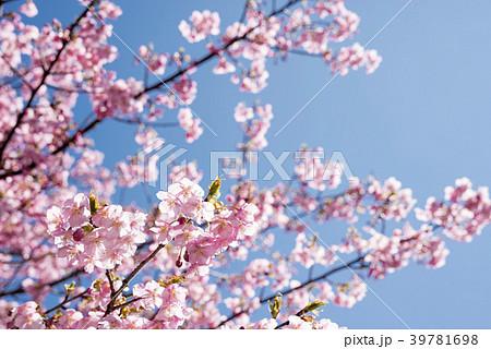 青空の下の河津桜の花 39781698