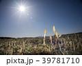 太陽の下のツクシ 39781710