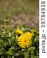 花 春 植物の写真 39784938