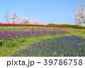 春 花 チューリップの写真 39786758