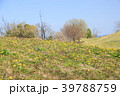 春の公園 タンポポの花 39788759
