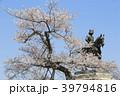 伊達政宗 桜 春の写真 39794816