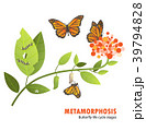 butterfly life cycle metamorphosis 39794828
