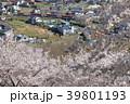 新倉山浅間公園から見る桜と成田エクスプレス 39801193