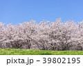 桜 草原 樹木の写真 39802195