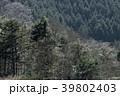 森 森林 木の写真 39802403