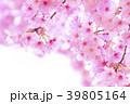 桜 花 春の写真 39805164