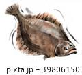 魚 平目 鮃のイラスト 39806150