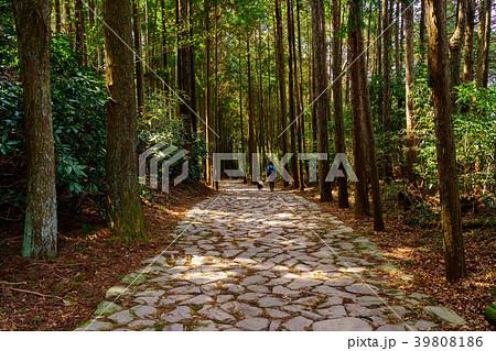 (静岡県)山中城址付近の箱根旧街道石畳 39808186