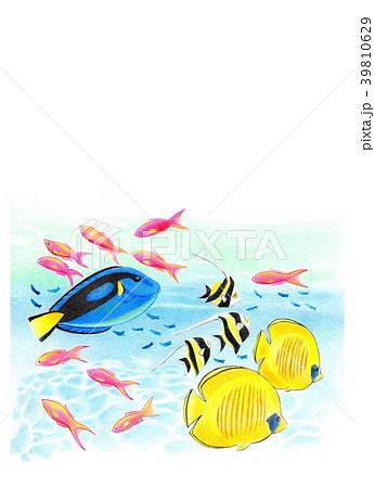 トロピカルな海 39810629