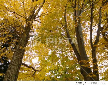 多摩平の森 39810655