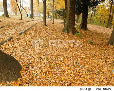 多摩平の森公園 39810689