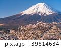 富士山 桜 花の写真 39814634