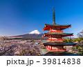 富士山 新倉山浅間公園 桜の写真 39814838