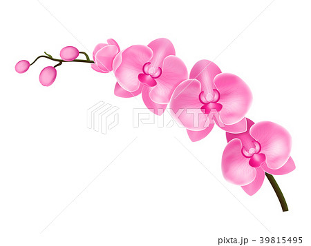 Realistic Detailed 3d Flower Orchid. Vector 39815495