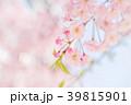 八重桜 春 桜の写真 39815901