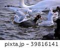 百合鷗 鳥 水鳥の写真 39816141