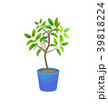 Plant Growing Lemon Tree in Pot. Vector 39818224