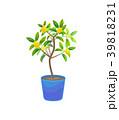 Plant Growing Lemon Tree in Pot. Vector 39818231