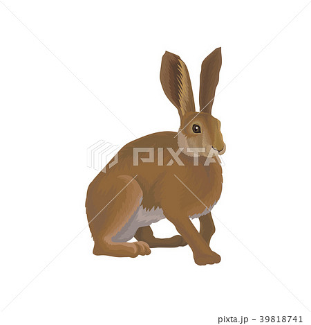 Hare wild northern forest animal vector 39818741