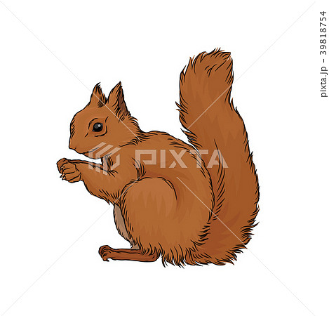 Cute red squirrel wild forest animal vector 39818754
