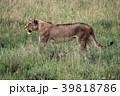 セレンゲティ国立公園 39818786