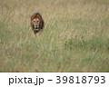 セレンゲティ国立公園 39818793