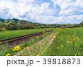 小湊鉄道 電車 菜の花の写真 39818873