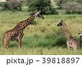 セレンゲティ国立公園 39818897