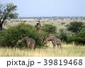 セレンゲティ国立公園 39819468
