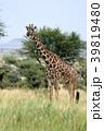 セレンゲティ国立公園 39819480