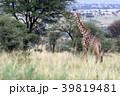 セレンゲティ国立公園 39819481