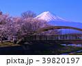 河口湖北岸からの桜と富士山 2018/04/10 39820197