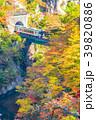 【宮城県】鳴子峡の紅葉 39820886