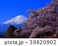 河口湖長崎公園の桜と青空の富士山 2018/04/10 39820902