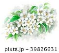 りんご 花 バラ科のイラスト 39826631