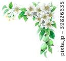 りんご 花 バラ科のイラスト 39826635