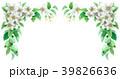 りんご 花 バラ科のイラスト 39826636
