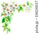 りんご 花 バラ科のイラスト 39826637