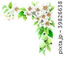 りんご 花 バラ科のイラスト 39826638