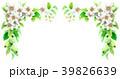 りんご 花 バラ科のイラスト 39826639