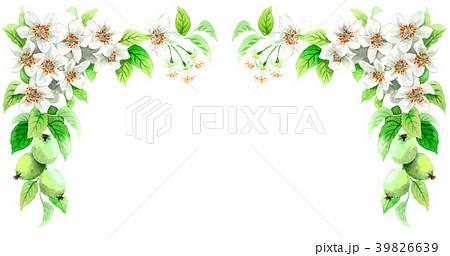 水彩で描いたりんごの花のフレーム素材 39826639