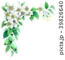 りんご 花 バラ科のイラスト 39826640