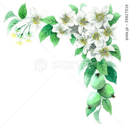 水彩で描いたりんごの花のフレーム素材 39827016