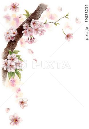 水彩で描いた桜の枝に咲く花 39828236