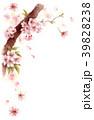 水彩で描いた桜の枝に咲く花 39828238